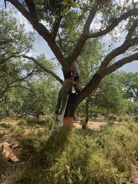récolte écorce chêne ouvriers travail main écolo responsable environnement forêt déco - clematc