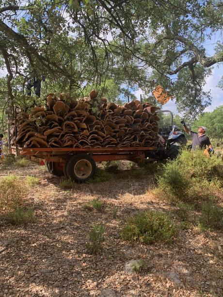 récolte suberaies camion forêt usine de tri - blog déco - clematc