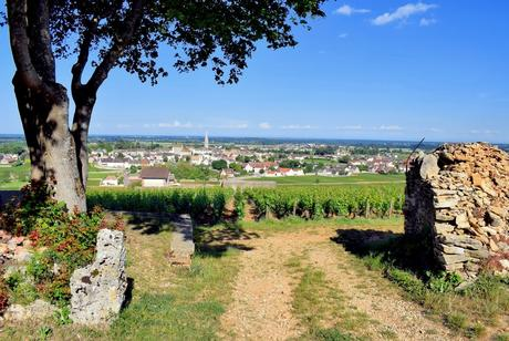 Vignoble de Meursault © French Moments