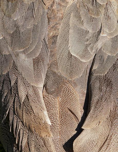 Birds, une série photographique surréaliste de Thomas Lohr