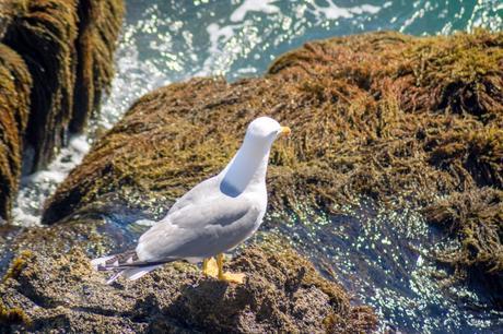 Au Cap d'Antibes sur le sentier du littoral
