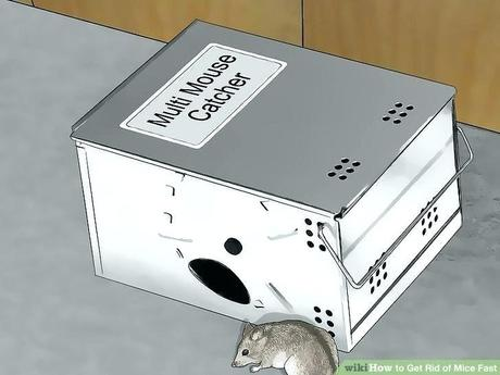 amazon mouse trap amazon mouse traps sticky