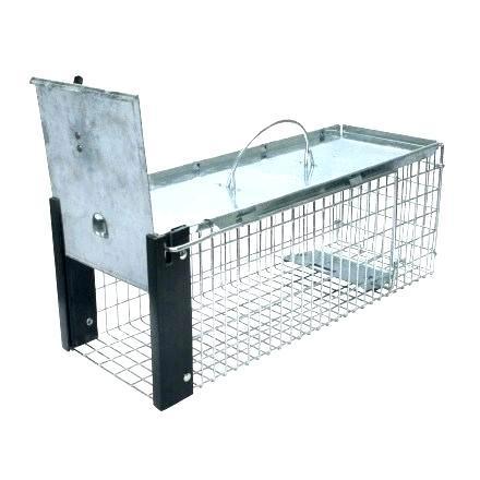 amazon mouse trap mouse traps amazon co uk