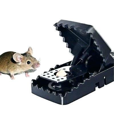 amazon mouse trap amazon mouse trap game