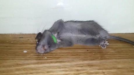 amazon mouse trap amazon uk mouse trap game