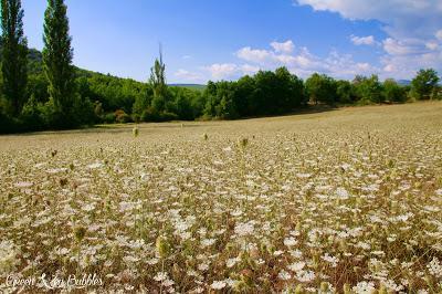 Les sauvages de Provence