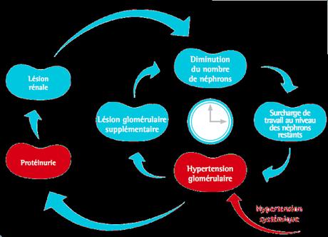 #thelancet #hypertension #insuffisancerénale #patiromer #spironolactone Patiromer versus placebo pour permettre l'utilisation de la spironolactone chez des patients atteints d'hypertension résistante et d'insuffisance rénale chronique (AMBER) : essai d...