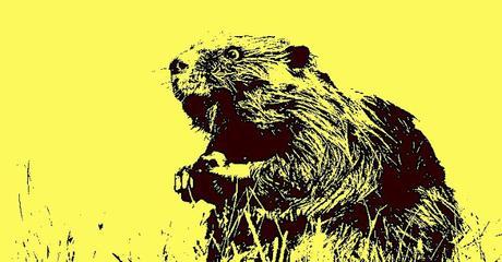 Les castors macronistes ont-ils disparu ? - 645ème semaine politique