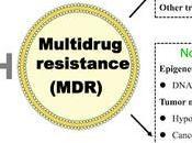 #trendsinfoodscienceandtechnology #thévert #épigallocatéchinegallate #résistance #médicaments Effets mécanismes l'épigallocatéchnine-3-gallate l'inversion résistance multiple médicaments