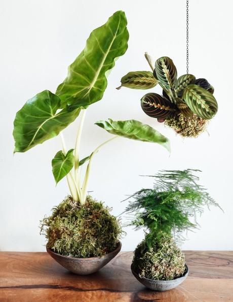 plante verte boule de mousse décoration végétale originale forêt green