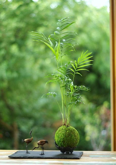 comment faire un kokedama plante verte ardoise forêt composition florale végétal - blog déco - clem around the corner