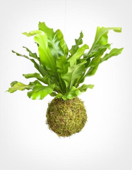 plante verte humide mousse de forêt décoration végétale suspension