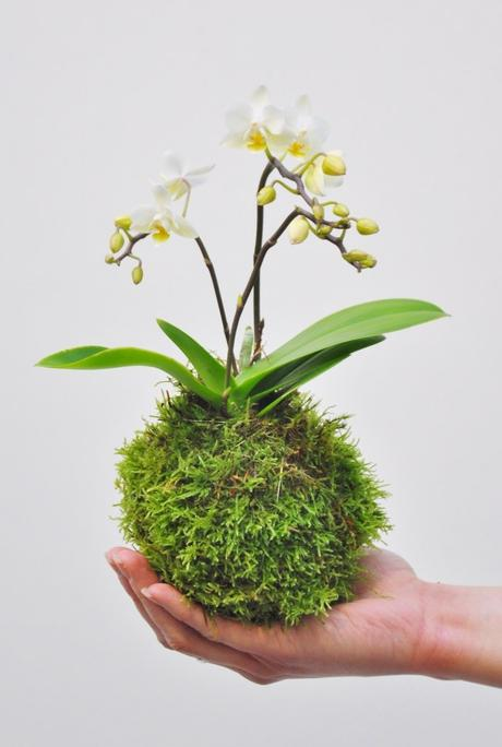 comment faire un kokedama orchidée fleurs composition végétale - blog déco - clem around the corner