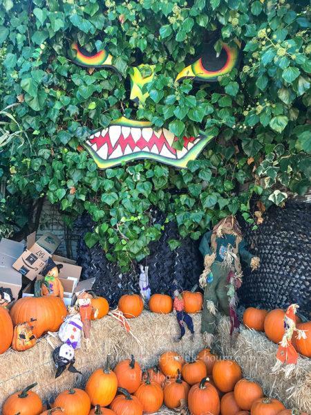 Piedmont Avenue Pumpkin Patch à Oakland