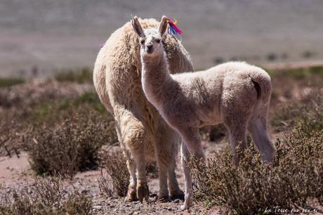 Vallée Arc-en-ciel du désert d'Atacama: 1000 fois waouh !