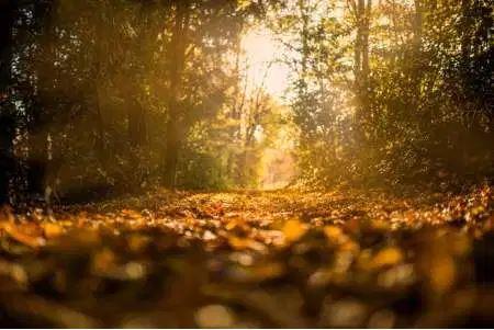 Prendre le temps de l'automne
