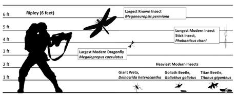 Comparaison de taille de différents insectes actuels et fossiles