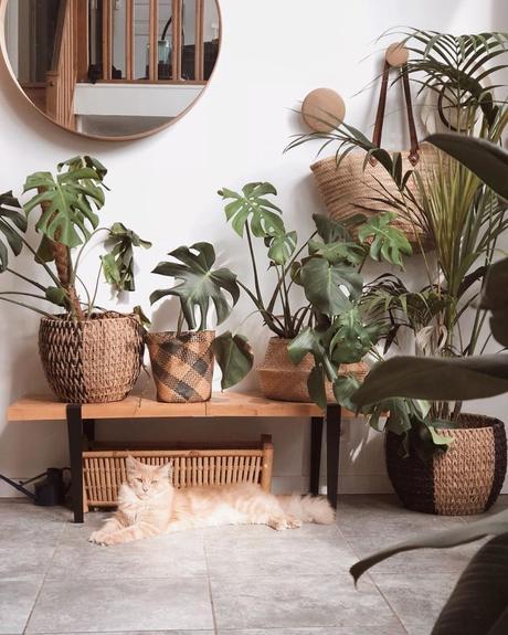 petite entrée urban jungle plein de plantes monstera palmier paris décoration