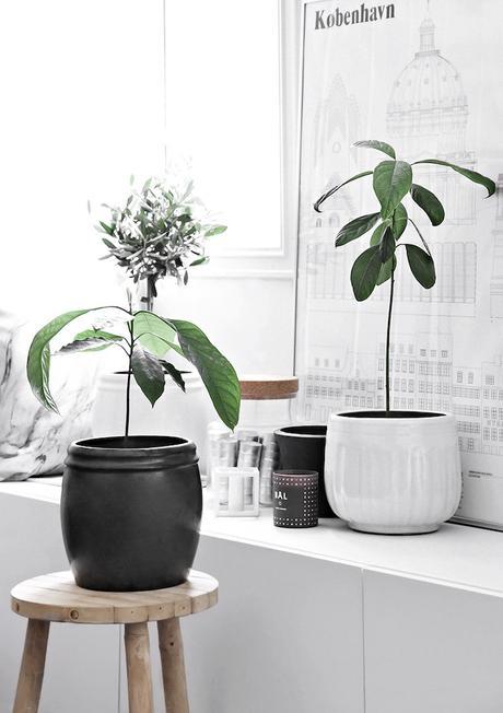 faire pousser un avocat noyau plante arbuste - blog déco - clem around the corner
