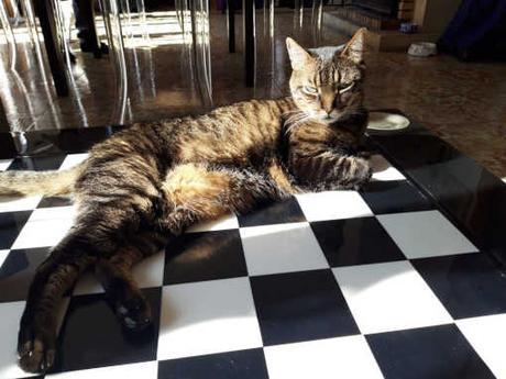 Le Chat du président de la fédération Monégasque des échecs, Jean-Michel Rapaire, assiste à tous les tournois