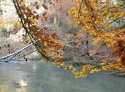 bonnes feuilles l'automne