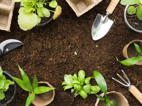 Plantes compagnes bien les associer au jardin