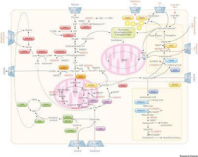 #trendsincancer #cancer #obésité #lipides Métabolisme des Lipides comme Pont entre Régime Alimentaire et Microenvironnement Tumoral