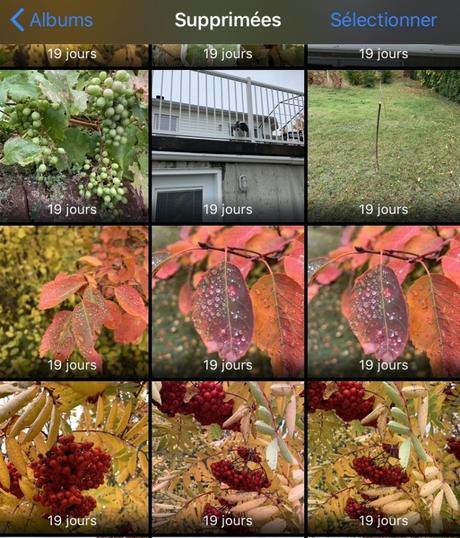 Comment récupérer des photos effacées sur votre iPhone ou iPad