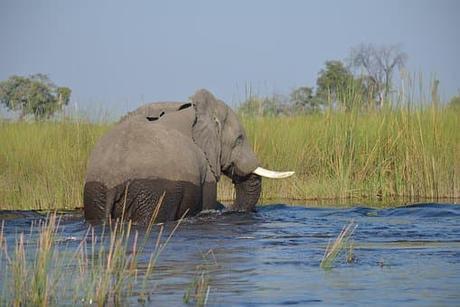 Séjour Botswana: pour une aventure hors du commun vers l'inconnu