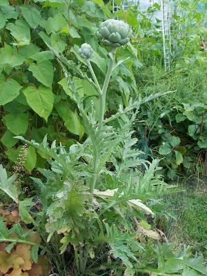 Plantes pérennes pour jardinier paresseux