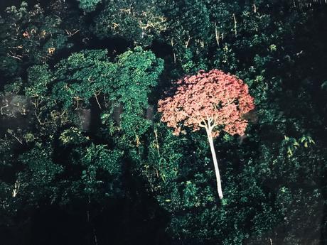(Expo) «Nous les arbres», à la Fondation Cartier pour l'art contemporain ou l'art de s'émerveiller