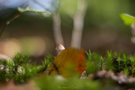 Le début de l'automne