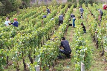 Film documentaire L'Ame Du Vin