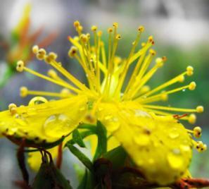 Agir sur une dépression légère par les plantes