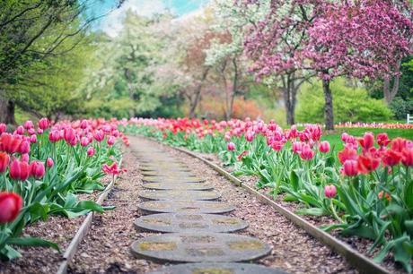 Trucs et astuces pour avoir un beau jardin