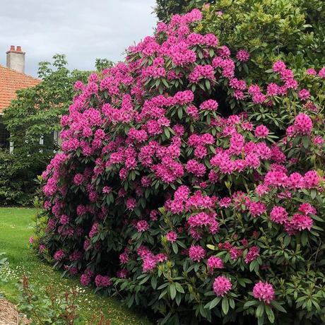 Les différents arbustes au jardin