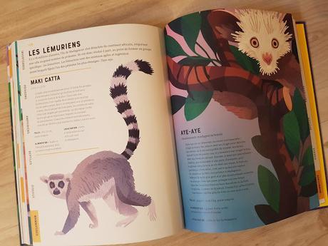 L'encyclopédie illustrée des animaux de Jules Howard et Jarom Vogel ♥ ♥ ♥