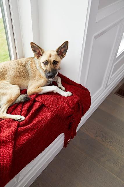 Un jeté à la fois : Comment aider les animaux dans le besoin