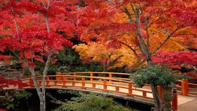 Koya-san, le Japon sacré et l'automne rouge