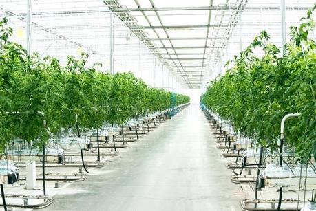 beautiful greenhouse pretty greenhouses uk