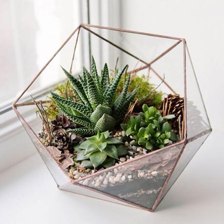 diy terrarium mini jardin verre bonbonniere vitrine hexagone cactus - blog déco - clem around the corner