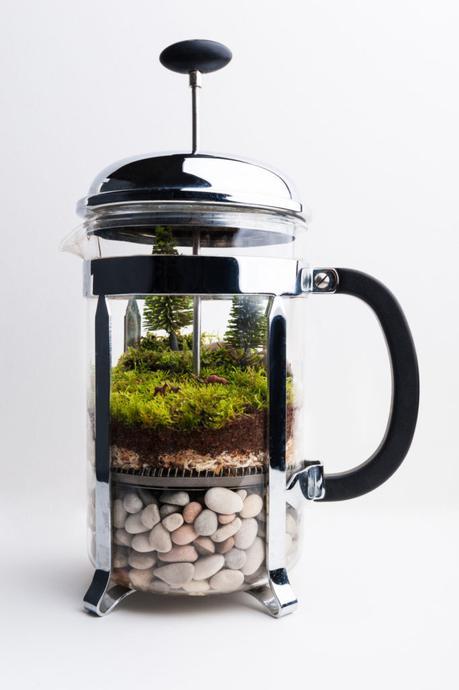 DIY terrarium french press original tuto mini jungle intérieure - blog déco - clem around the corner