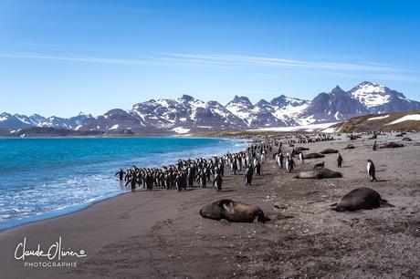 L'aventure merveilleuse en Antarctique ! Partie 2: La Géorgie du Sud