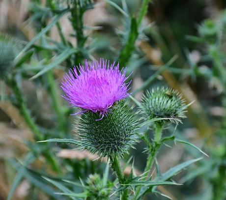 Les plantes détoxifiantes