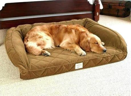 sams club dog bed sams club oval dog bed