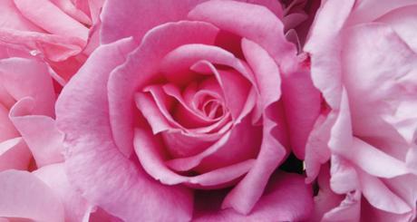 Riz au lait à la rose