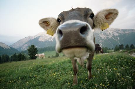 Manger de la viande en conscience