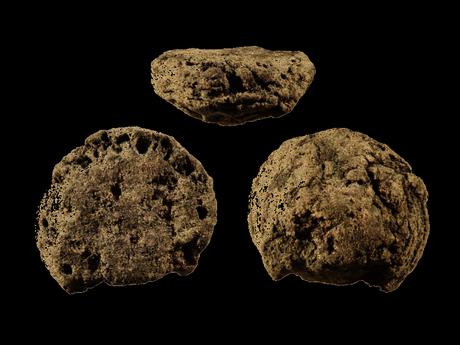 Pas de glucides lents dans le régime Paléo? Que nenni! Une récente découverte repousse à 170000 ans la date de nos premiers méchouis végé avec l'excavation sud-africaine de restes de racines rôties.