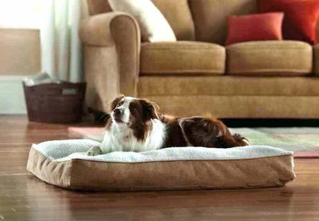 top rated dog beds best dog beds for older dogs