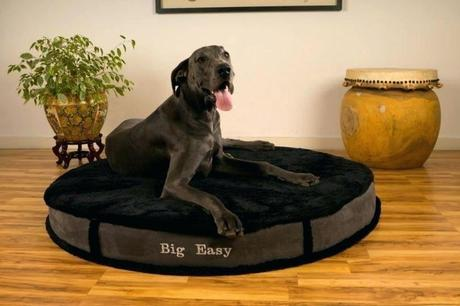top rated dog beds best rated dog beds for large dogs